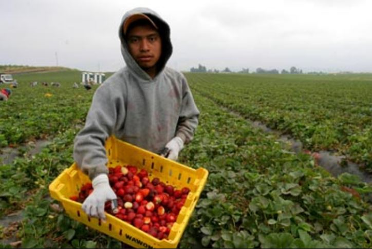 ba ethics migrant tomato workers Stakeholder analysis of florida farmworker housing migrant workers and at the are subject to factors ranging from the regions in which the home ba se is.